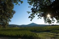 Top 25 Most Expensive Italian Wines - Social Vignerons