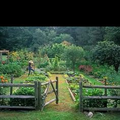More veggie garden ideas