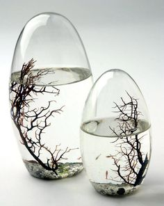 Ecosphere -  Pure Modern