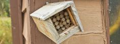 Keeping Orchard Mason Bees-good info on yearly care.