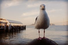 The #supermodel #seagull
