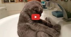 Click to see a really cute kitty enjoying himself in the sink!