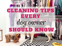 CLEANING TIPS EVERY DOG OWNER SHOULD KNOW | eBay