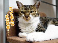てんちゃんとカミナリ   うにオフィシャルブログ「うにの秘密基地」Powered by Ameba