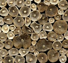 35929 mushrooms | by horticultural art