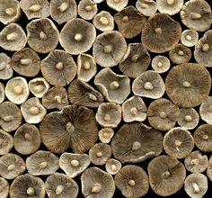 35929 mushrooms | Flickr - Photo Sharing!