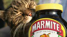 ¿Qué es el Marmite o Vegemite Marmite Recipes, I Miss Your Face, Breakfast Of Champions, Great British, Quick Recipes, Amazing Nature, Cat Love, Superfood, Vegans