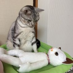 腹筋崩壊注意!! 日本中を笑いに包み込むニャンコたち 25枚 - ペット日和 Cute Creatures, Funny Animal Images, Funny Cat Pictures, Cute Funny Animals, Animal Memes, Funny Cute, Silly Cats, Funny Cats And Dogs, Crazy Cats
