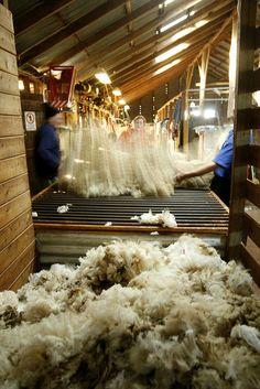 ♥ Shearing Shed