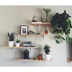Plants and illustrations: open shelving styling
