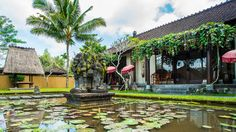 Pond view from the one bedroom suite at The Chedi Club Tanah Gajah, Ubud, Bali