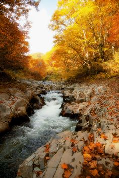 Look at the beautiful world the Lord has created. Image Nature, All Nature, Autumn Nature, Autumn Leaves, Beautiful World, Beautiful Places, Beautiful Pictures, Autumn Scenery, Seasons Of The Year