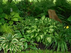 Hosta, rock as garden decor, forest grass, daylilies, ferns, pulmonaria...