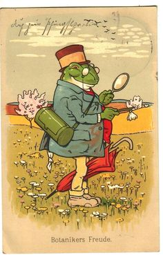 Frog Pics, Frog Pictures, Funny Frogs, Cute Frogs, Arnold Lobel, Frog Drawing, Frog Art, Spiritual Symbols, Draw