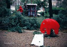 Piros elefánt vihar után