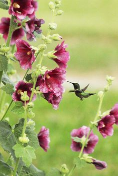 Hummingbird, Moon Lake, NY by All Things Colorful, via Flickr