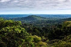 """""""As áreas protegidas são a melhor ferramenta de conservação que temos em nossa caixa de ferramentas"""", diz o pesquisador Mark Mulligan. A Floresta Nacional de Carajás, Pará, Brasil"""
