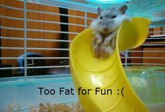 I love fat animals!!!HA HA HA!My brother thinks it's hilarious.....Well because it is!!!!!  No fun for him!HA!
