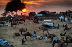 The sun sets over the fringes of the Thar Desert, where the Pushkar Camel Fair, one of India's most spectacular fairs, is held every autumn, in Pushkar, Rajasthan.