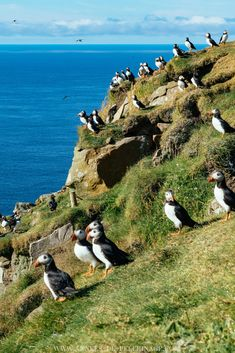 A puffin colony in the Faroe Islands, Denmark Faroe Islands, Cool Places To Visit, Travel Photography, Scenery Photography, Night Photography, Landscape Photography, Adventure Travel, Travel Inspiration, Beautiful Places