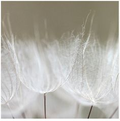 Fluffily, bird like, delicate, soft, soothing, whimsical, and mysterious