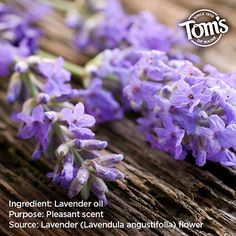 The natural fragrance of lavender can be found in some of our deodorants and bar soaps. Lavender Oil, Healthy Living Tips, Deodorant, How To Stay Healthy, Healthy Lifestyle, Health Fitness, Healthy Recipes, Diet, Canning