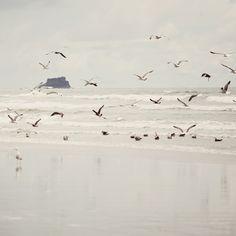 ~ seagulls ~