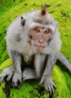 Forest Monkey - Ubud, Bali