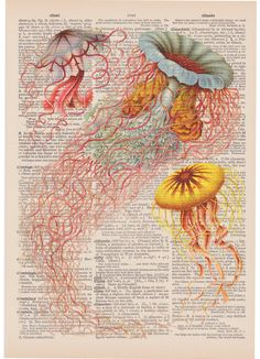 Vintage Ernst Haeckel Jellyfish Victorian Era Science Illustration In Corals and Blues On An Antique Dictionary Page. $9.00, via Etsy.