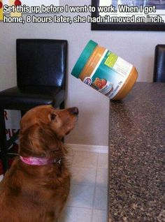 Dogs love peanut butter