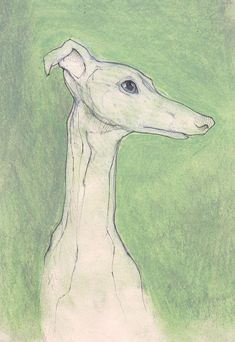 Whippet art print, a print from an original pencil and pastel drawing by UK artist Jim griffiths,illustration,wall art, whippet art