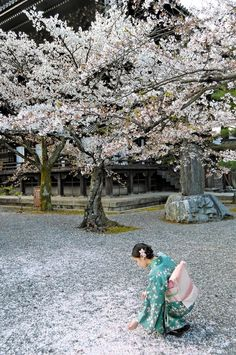 Picking up petals of Cherry Blossom - Kyoto, Japan 花びら拾い Go To Japan, Visit Japan, Japan Japan, Okinawa Japan, Hiroshima, Beautiful World, Beautiful Places, All About Japan, Kyushu