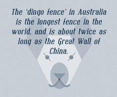 'The Dingo Fence or Dog Fence is a pest-exclusion fence that was built in Australia during the 1880s and finished in 1885, to keep dingoes out of the relatively fertile south-east part of the continent (where they had largely been exterminated) and protect the sheep flocks of southern Queensland. It is one of the longest structures in the world and is the world's longest fence' Wikipedia