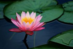 flor de lotus | Tumblr great mix (image unrelated): http://blogs.kcrw.com/musicnews/audio/ZtripMBE.mp3