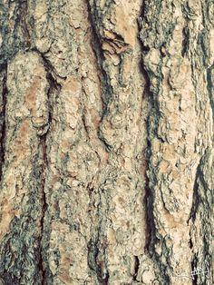 Pine Tree #Pine #Trees #Nature