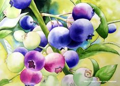 블루베리 색이 이렇게 고운줄 처음 알았어요.어쩜 이렇게 색감과 번짐도 단아하게 표현하셨는지. 배경처리 ...