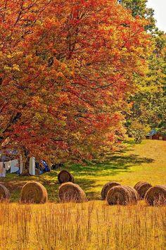 fall field, hay bales, fall foliage