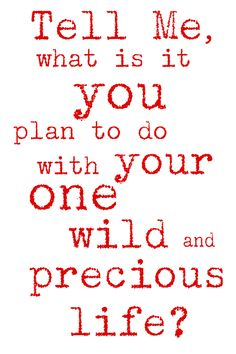 Live your wild and precious life