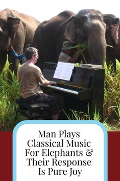 20a019847880c Who knew that elephants had a musical preference