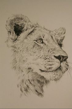 Animal Sketches, Animal Drawings, Cool Drawings, Pencil Drawings, Lion Drawing, Painting & Drawing, Female Lion Tattoo, Lion Sketch, Lioness Tattoo