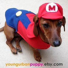 I am a fan of Young Urban Puppy the owner is an amazing imaginative dog clothes designer -- Mario pet costume #halloween