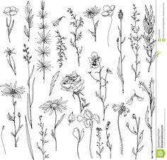 Floral Doodle Set Stock Vector - Image: 56455939
