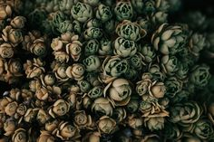 succulents galore > average vase of flowers | Image by India Earl