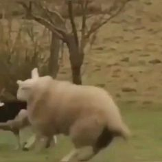 Happy Animals, Cute Funny Animals, Cute Baby Animals, Funny Cute, Animals And Pets, Cute Animal Videos, Funny Animal Pictures, Arte Libra, Cool Pets