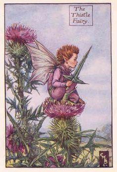 FLOWER FAIRIES: THISTLE FAIRY. Old print. c.1930. Cicely Mary Barker