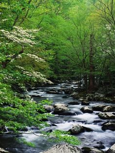 Stream in Lush Forest Fotoprint van Ron Watts bij AllPosters.nl