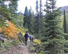 hot springs trail Hiking in the Zirkel Wilderness near Steamboat Springs, Colorado - © Lois Friedland