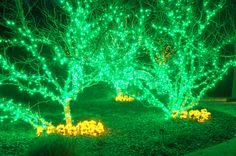 The Scroll Garden has never been as bright as it is this year during Holidays at the Garden 2014 at Daniel Stowe Botanical Garden.