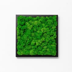 Green means life, revival, nature,energy - a green moss frame means all of the above mentioned plus a nice wall art decor and a smile on your face. Wall, Poster Wall, Wall Art, Wall Art Decor, Green Wall, Bedroom Green, Green, Frame, Preserved Moss