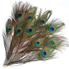 10Pcs/set 10-12 Inches Real Natural Peacock Eye Tail Feathers Beautiful Natural Feathers Wedding Party Home Hairs DIY Decoration